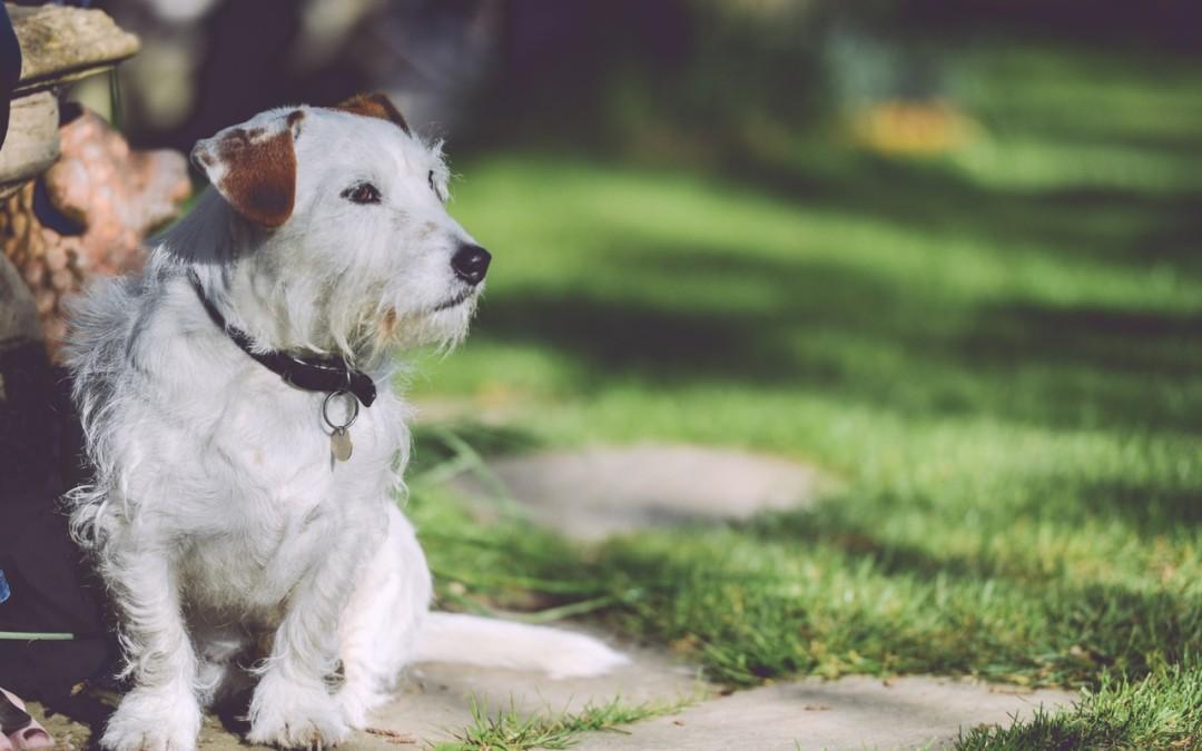 Lost Pet? Helpful Tips