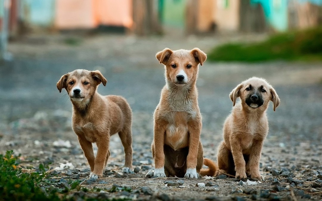 Trivias About the Most Famous Dogs on TV