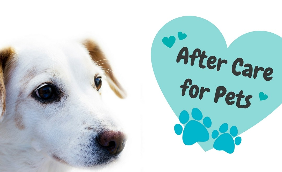 After Care for Pets