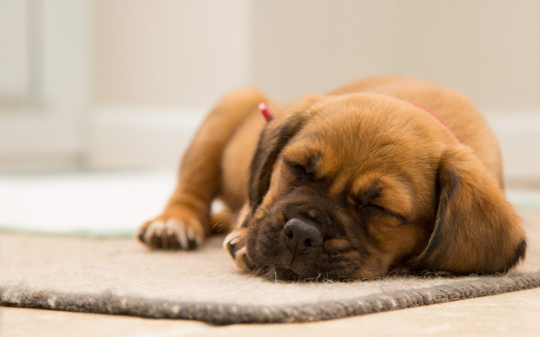 Home Remedies For Your Dogs