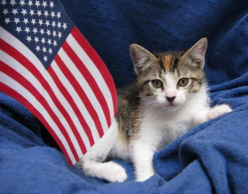 4 Tips to Keep Pets Safe on the Fourth
