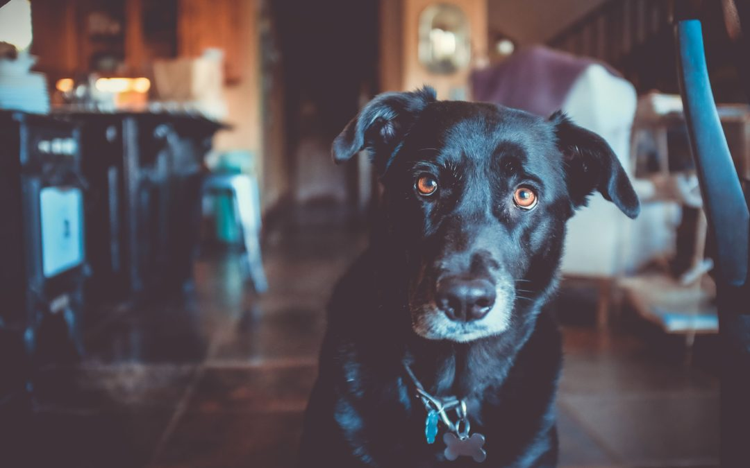"""What """"Back-to-School"""" Can Mean For Your Furry Friends"""