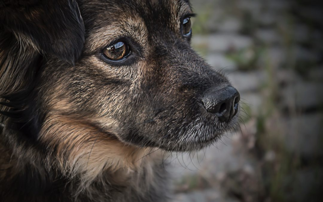 4 Things You Should Know When Adopting a Senior Pet
