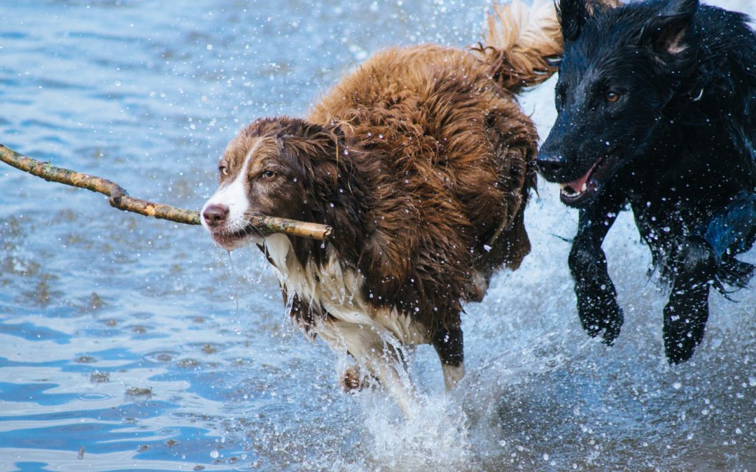 """Top Tips for Planning """"Playdates"""" for Your Dog"""