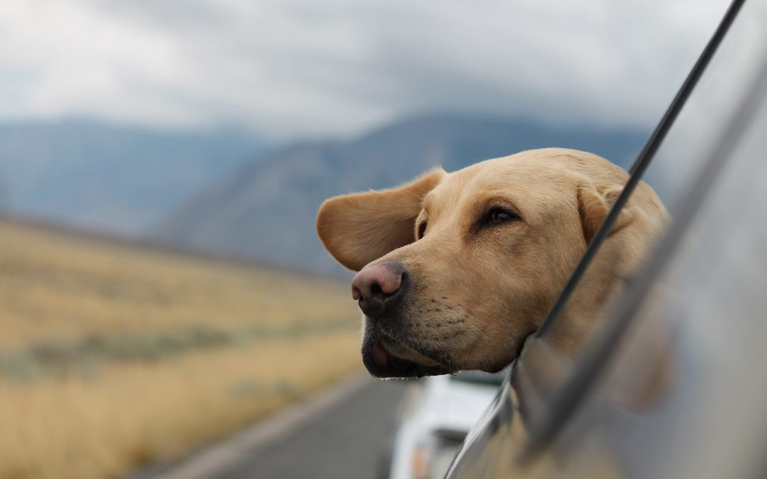 Check out These Cool Pet Fairs and Conferences