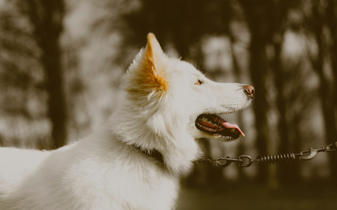 The Benefits of Brain Training for Pets