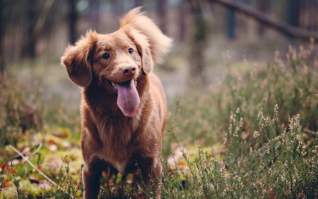 3 Tips to Know this Lost Pet Prevention Month