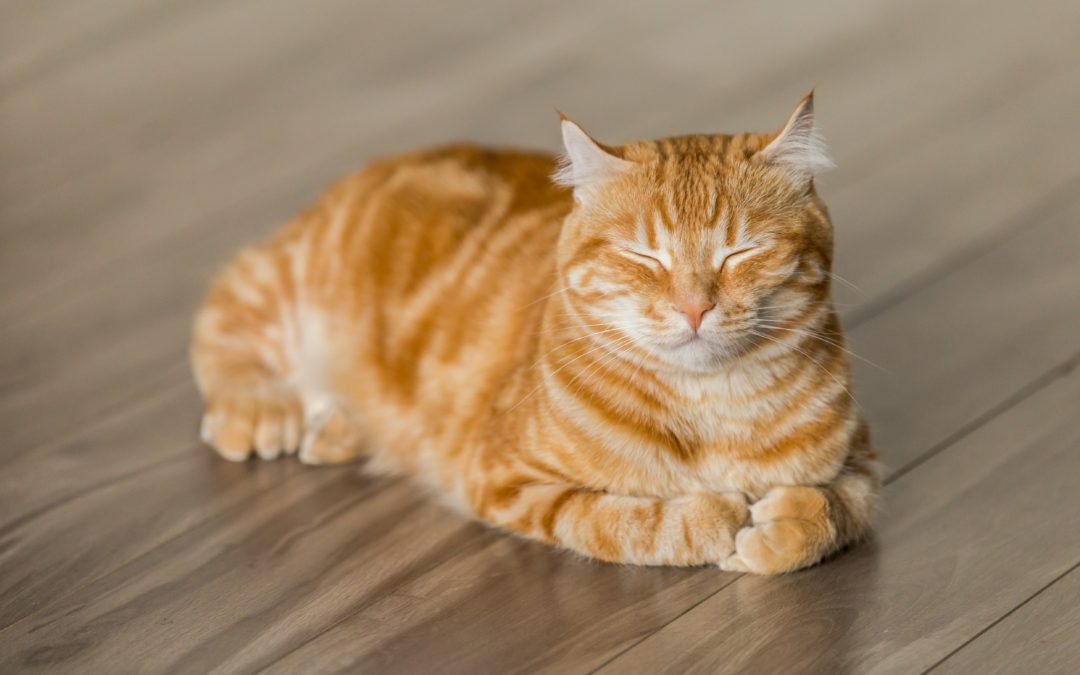 How Proper Grooming Keeps Your Cat Feline Fine