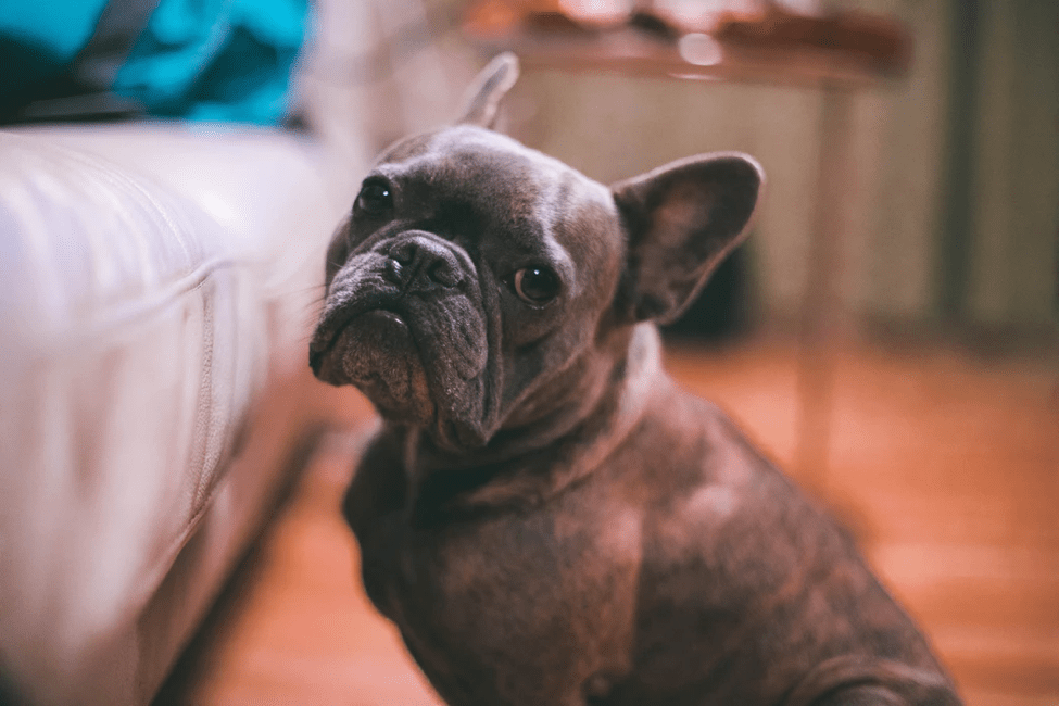 3 Steps to Maintaining  a Tidy Home When You Have a Dog