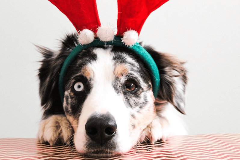 The Best Christmas Wish List for Dog Lovers