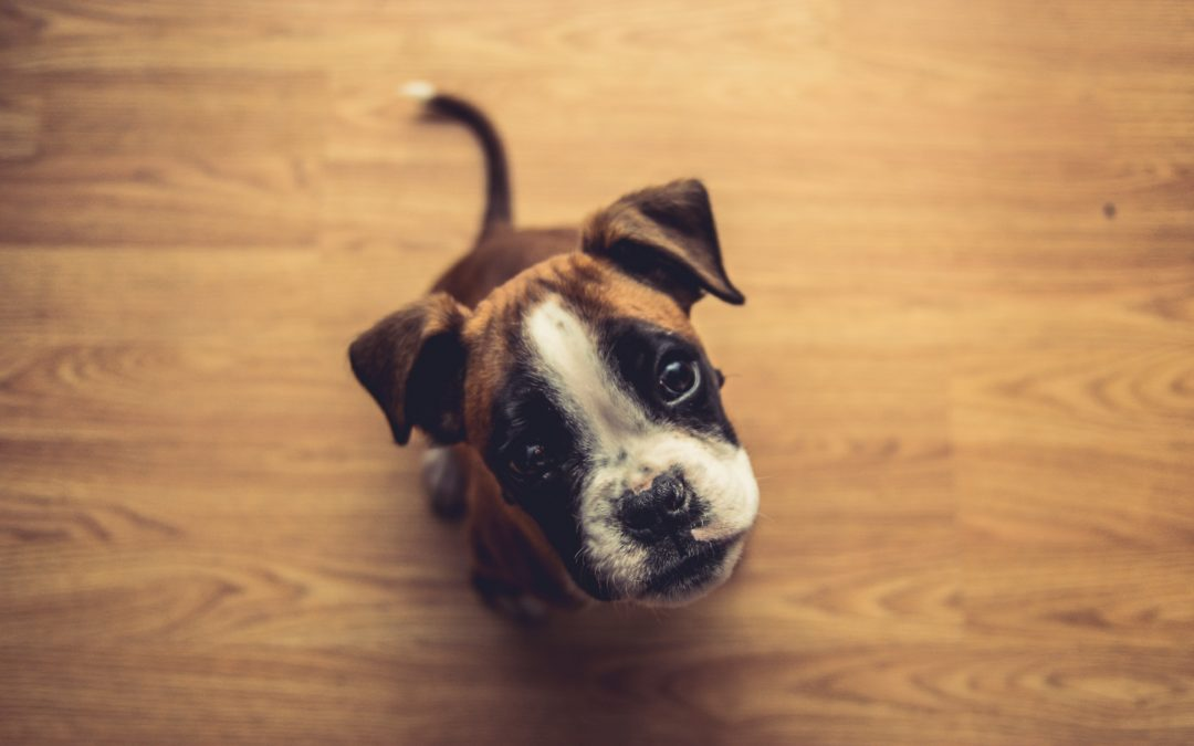 Keep Your Pet Healthy This Year with These Diet Tips!