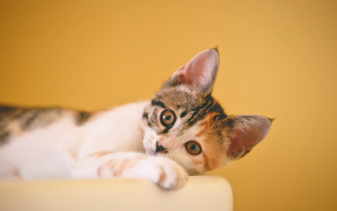 Tips to Keep Those Canines (And Felines) Healthy!