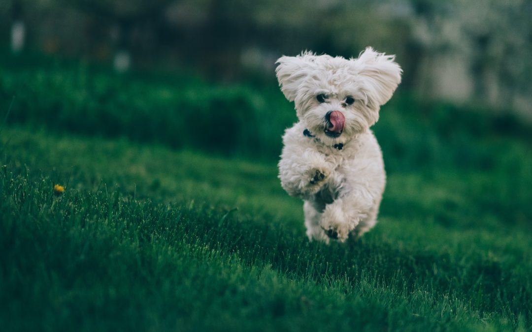 How to Keep Your Pet's Heart Healthy
