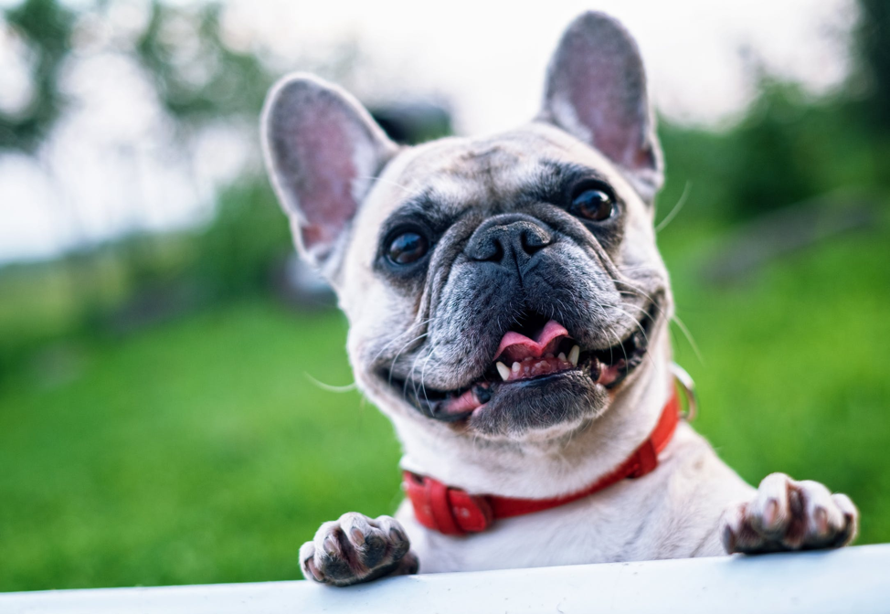 Saving Money on Your Senior Pet Can Be Simple with These Tips
