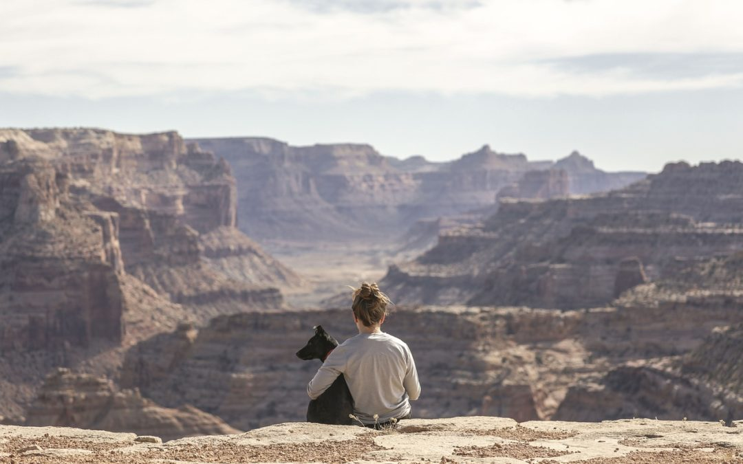Traveling with Your Pet: Avoiding Problems During the Trip