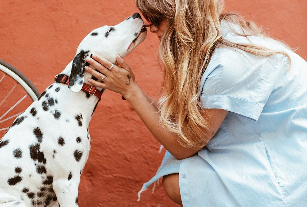 Learn Your Pet's Love Language this Valentine's Day!