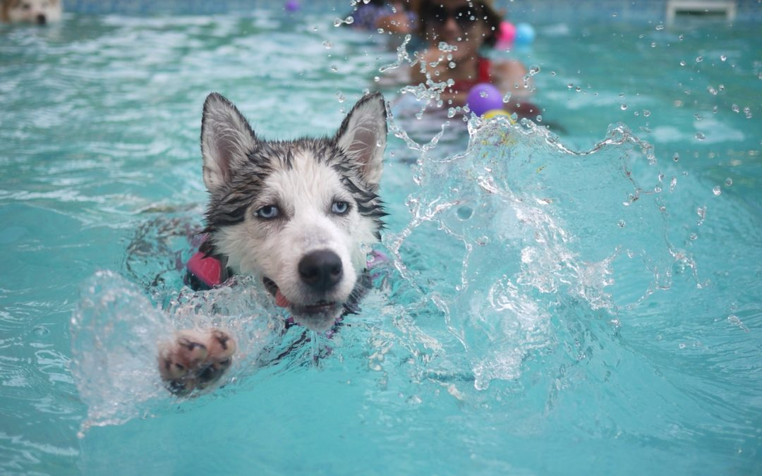 Keeping Pets Cool: Pool Safety 101