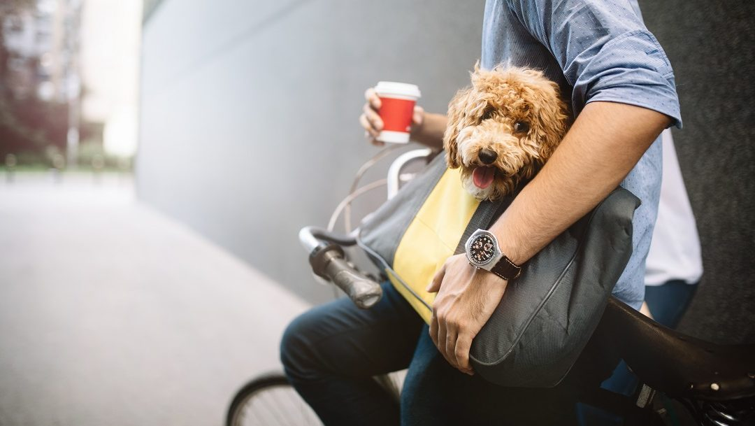 How to Choose the Right Size of Dog Carrier