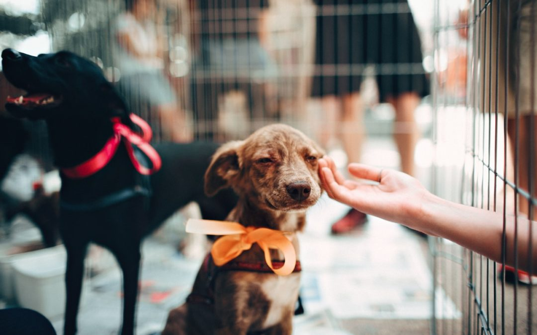 Let's Get Crafty for Your Local Shelter Pets