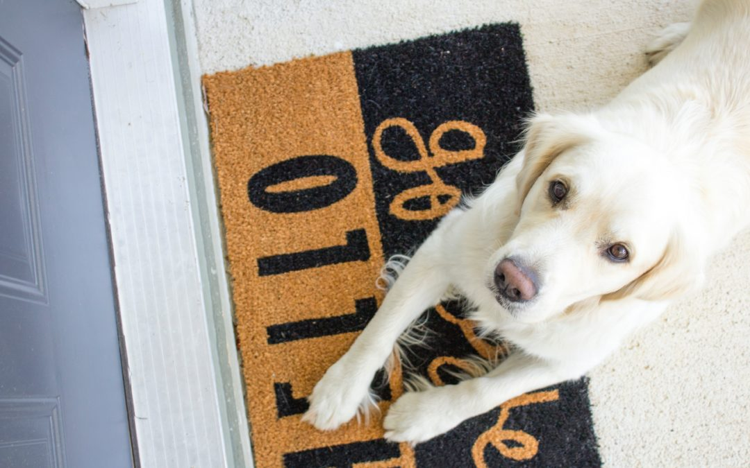How to Find the Perfect Home for You and Your Pooch