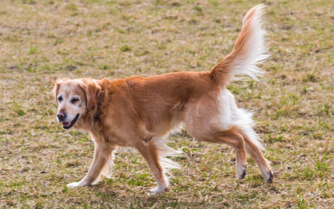 Top 8 Easiest Dogs To Train: Training Guide