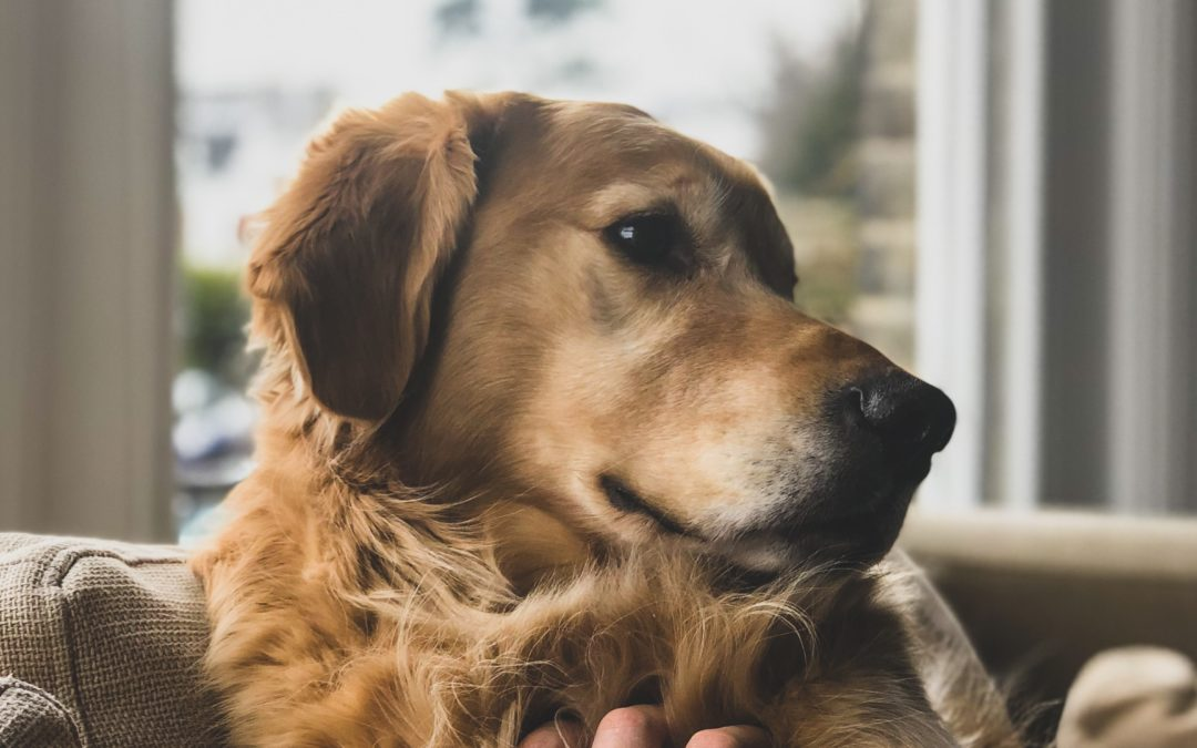 Pet-Hair Removal Hacks That Will Change Your Life