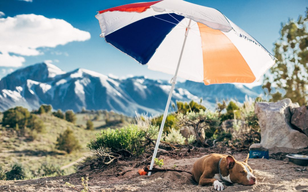 When Temperatures Rise, Re-fur to these Pawsome Tips