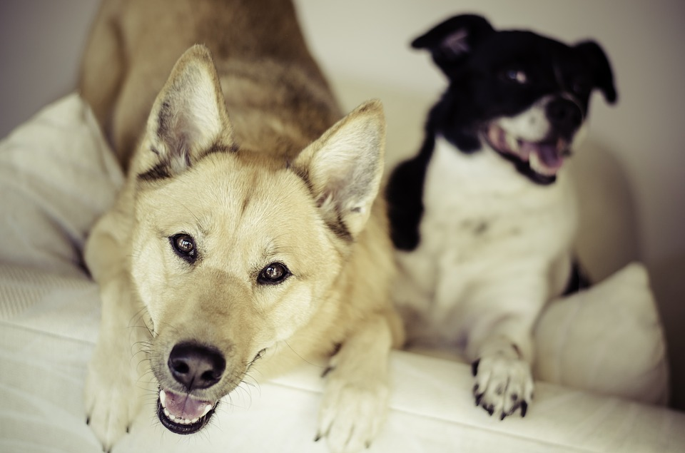 My Dog is Afraid of Other Dogs! What Should I Do?