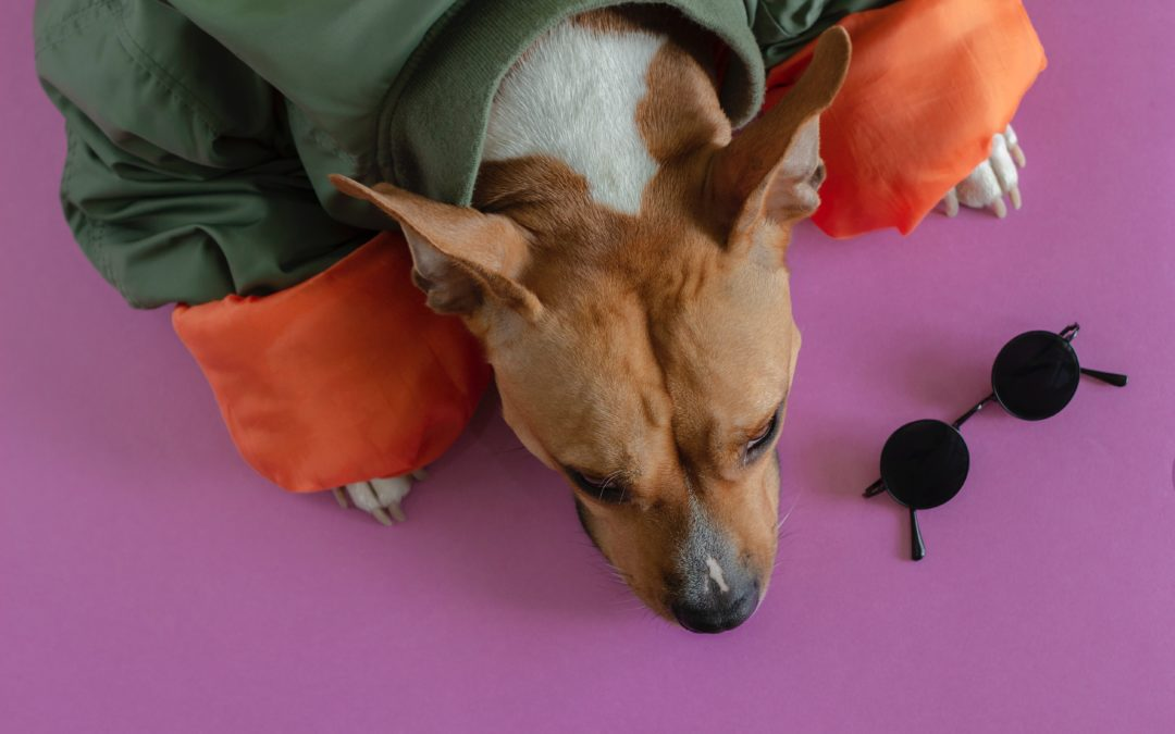 The Easiest DIY Halloween Costumes for Your Pets