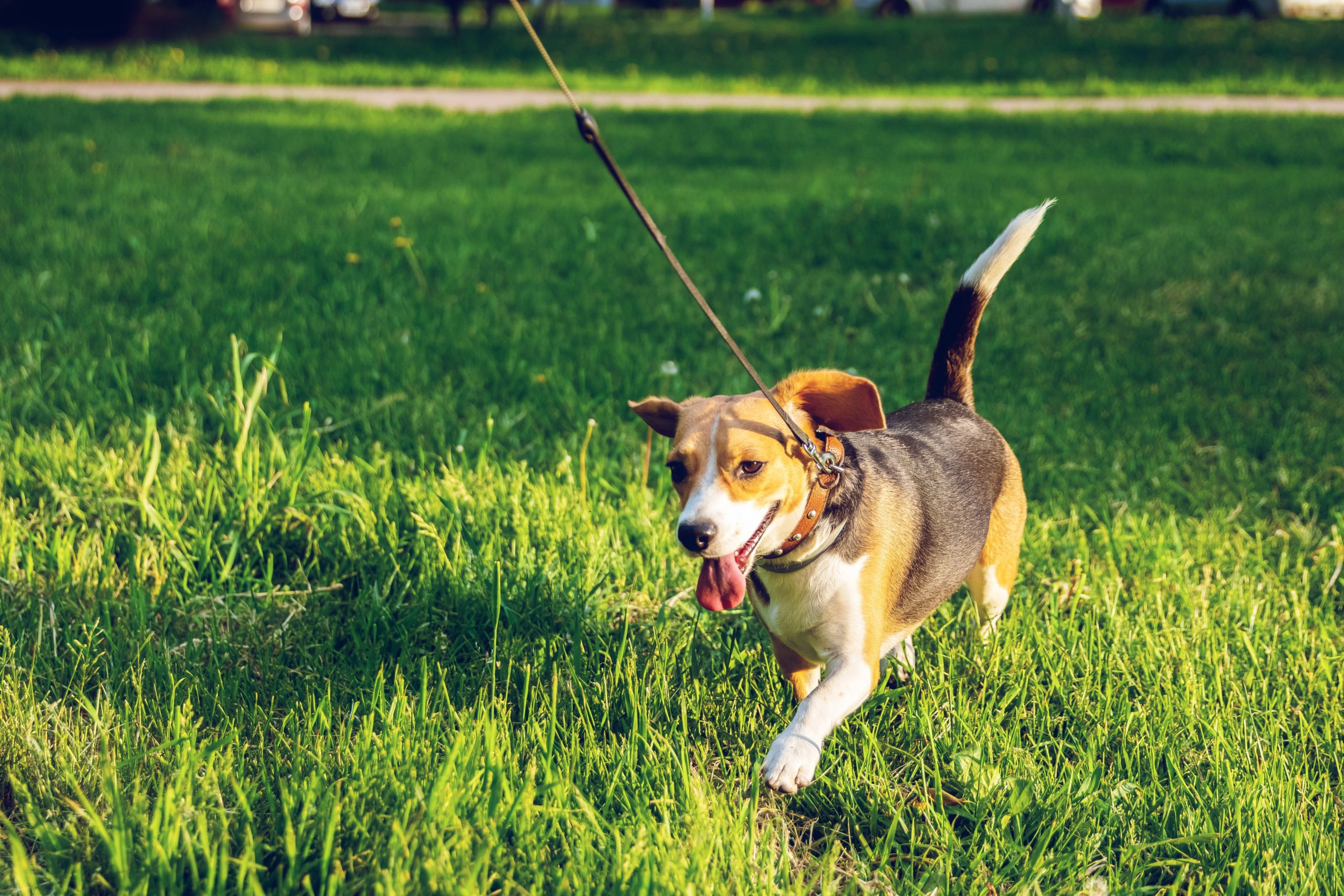 3 Tips for Training Your Dog to Jog With You
