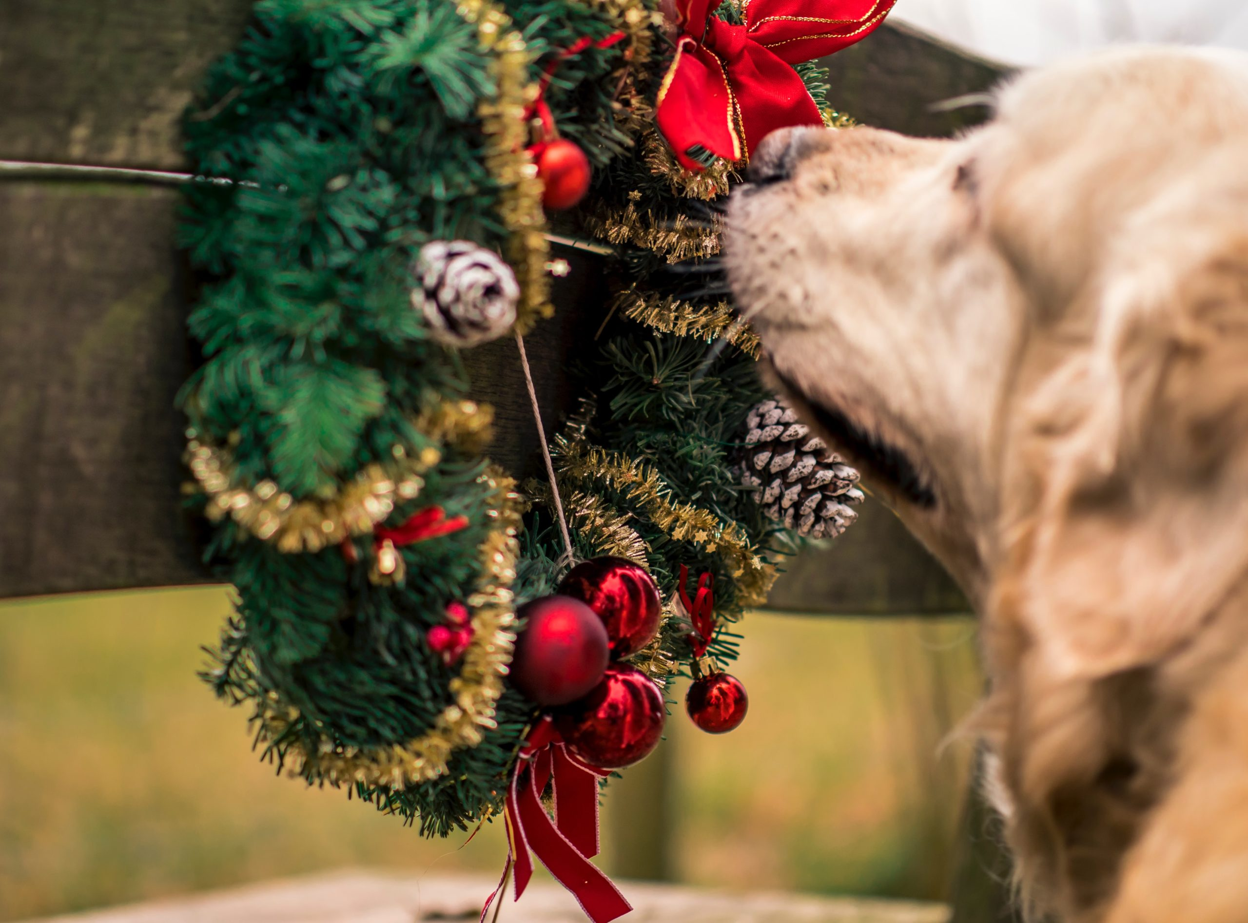 5 Can't Miss Tips for a Pet Friendly Holiday