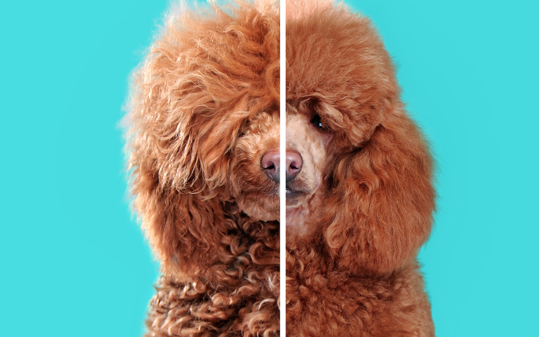 Essential Items You Should Have To Do Simple Dog Grooming At Home