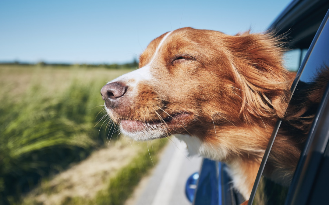8 Tips On How To Comfortably Travel With Your Pets