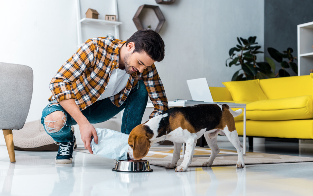 Dog Food Canada: What Are The Best Brands In The Country?