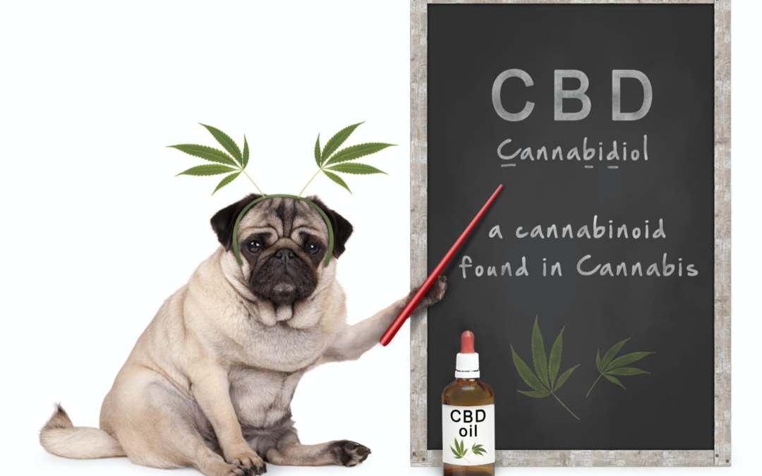 How Your Pets Benefit From Taking CBD Products