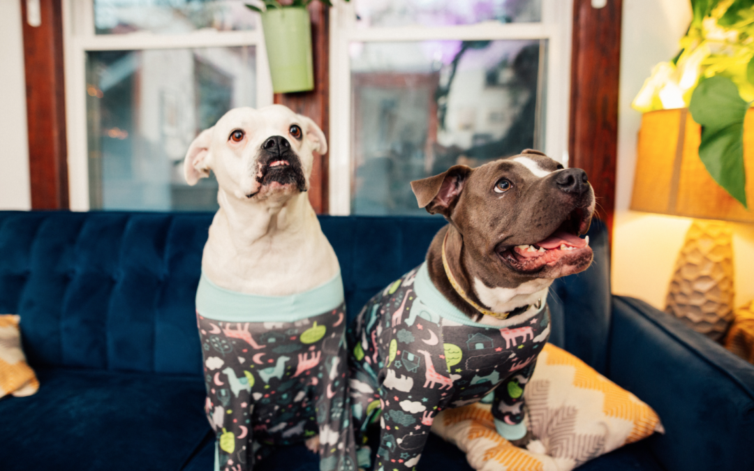 10 Health Issues Every Bluenose Pitbull Owner Should Know About